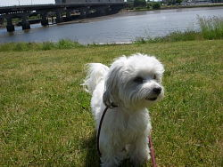 Oliver, Maltese cross